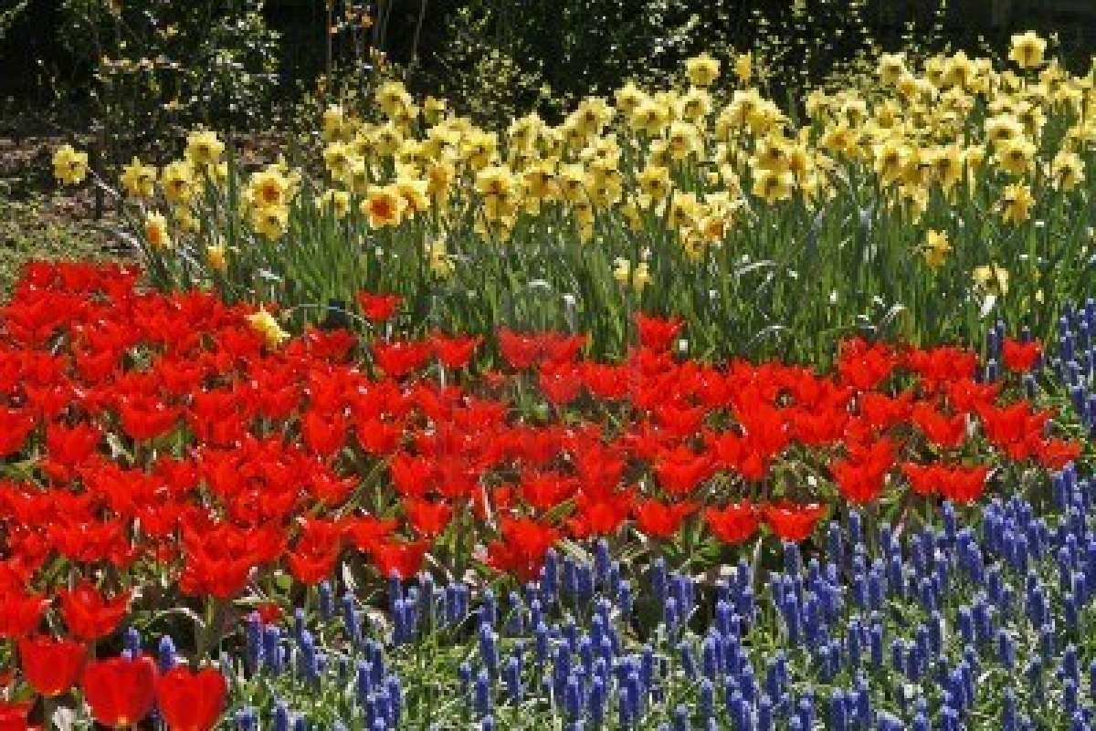 3872227-tulip-flower-bed-with-hyacinths-muscari-and-narcissus